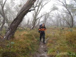 Hiking through snowgum forest, Howitt Plains