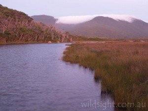 Tidal River from Loo-ern Track