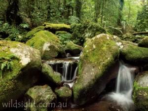 Toolona Creek