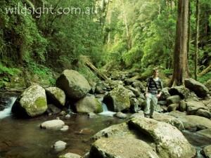 Crossing Canungra Creek, Lamington National Park