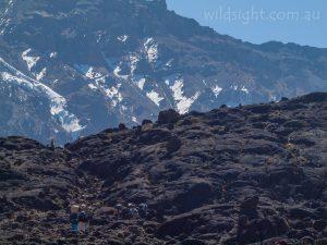 Hikers approach Mt Kilimanjaro