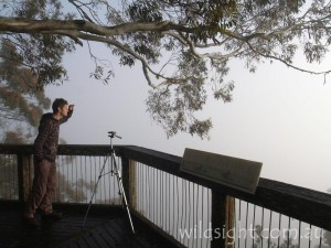 Point Lookout morning fog