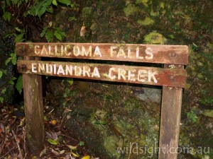 Callicoma Falls sign