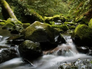 Five Day Creek