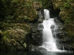Coachwood Falls