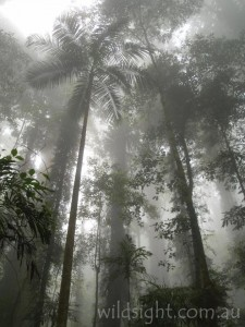 Sub-tropical rainforest, Dorrigo National Park