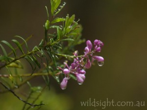 Wildflowers at Wrights Lookout