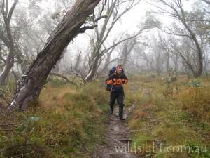 Hiking through snowgum forest, Howitt Plains