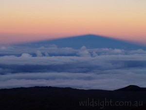 Shadow of Mauna Kea at sunset