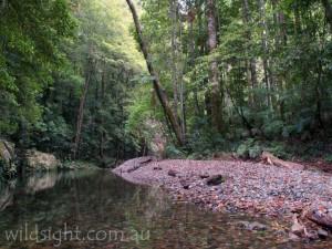 Rosewood Creek