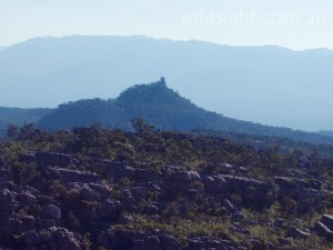 Tower Hill from the slopes of Mount Rosea