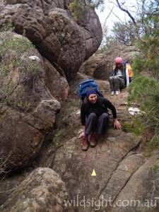 Typical Grampians hiking track