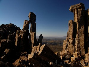 Rock spires on Cradle Mountain summit