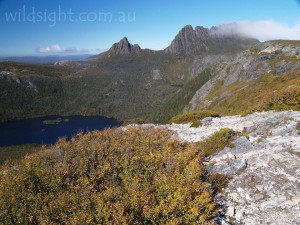 Cradle Mountain from Marions Lookout