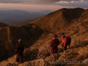 Hikers on Mount Feathertop