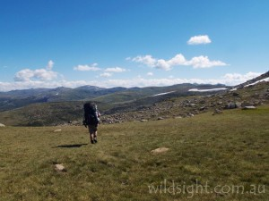 Mount Kosciuszko rises on the horizon
