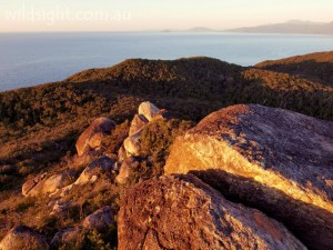 Fitzroy Island, sunrise, summit