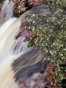 Kynvett Falls