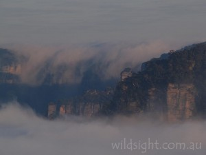 Katoomba cloud