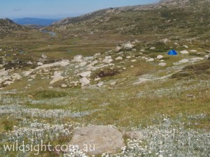 Campsite at Wilkinsons Creek below Mt Kosciuszko