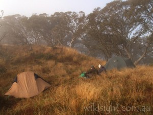 Camping on the King Billies