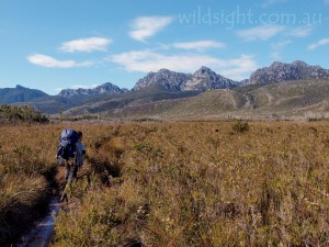 Approaching the Western Arthurs on the Port Davey Track