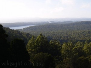 View from Five Ways Lookout, Mount Dandenong