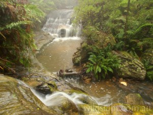 Creek junction, Leura Cascades