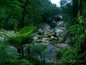 The Boulders, Babinda