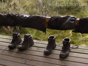 Boots drying outside hut, Overland Track