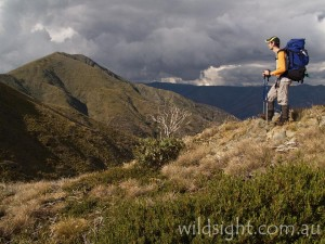 Approaching Mount Feathertop