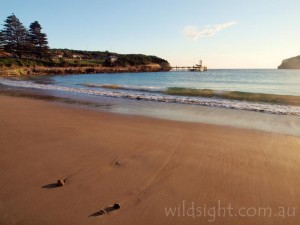 Port Campbell beach at sunset
