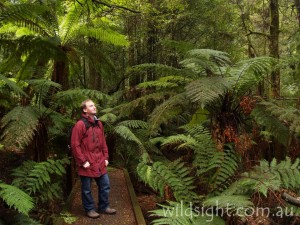 Wirrawilla rainforest walk