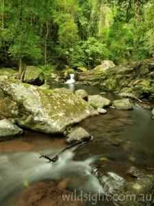 Wongaree Falls