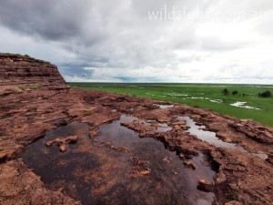 Kakadu floodplains in the wet season, viewed from Ubirr