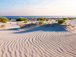 Dunsborough dunes