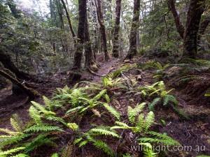 Mt Oakleigh track