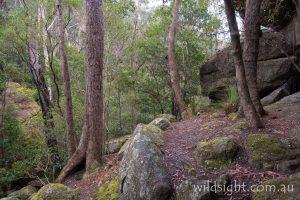 Cooyoyo Creek cave, Budawangs