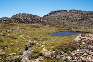Eliza Plateau, Mount Anne track, South-West National Park Tasmania