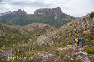 Hikers descend to the Labyrinth from the Parthenon, Cradle Mountain-Lake St Clair National Park Tasmania