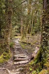 Pine Valley track, Cradle Mountain-Lake St Clair National Park Tasmania