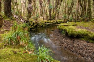 Cephissus Creek, Pine Valley, Cradle Mountain-Lake St Clair National Park Tasmania