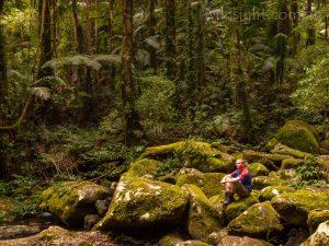 Lamington rainforest